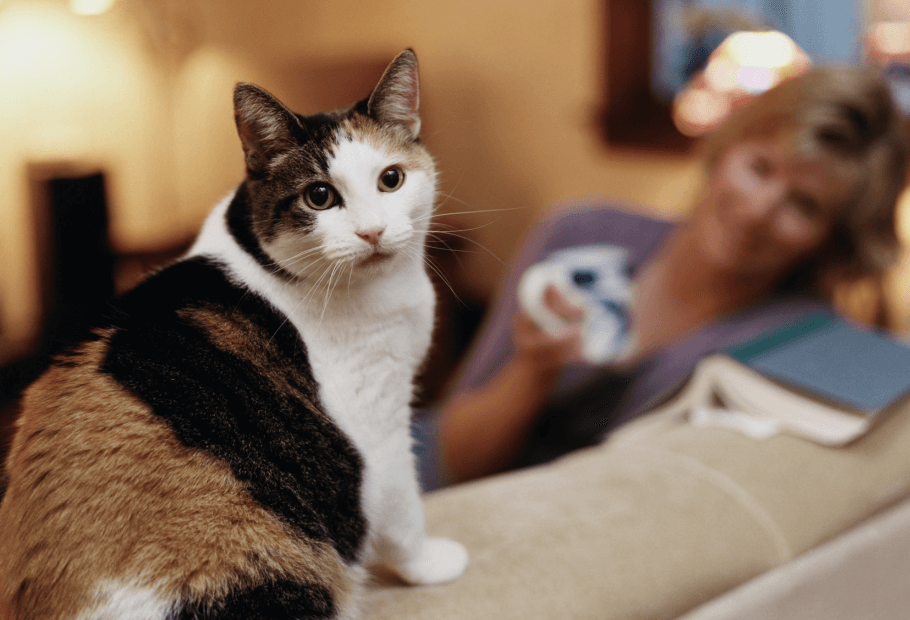 Preventative/Wellness Care for Cats