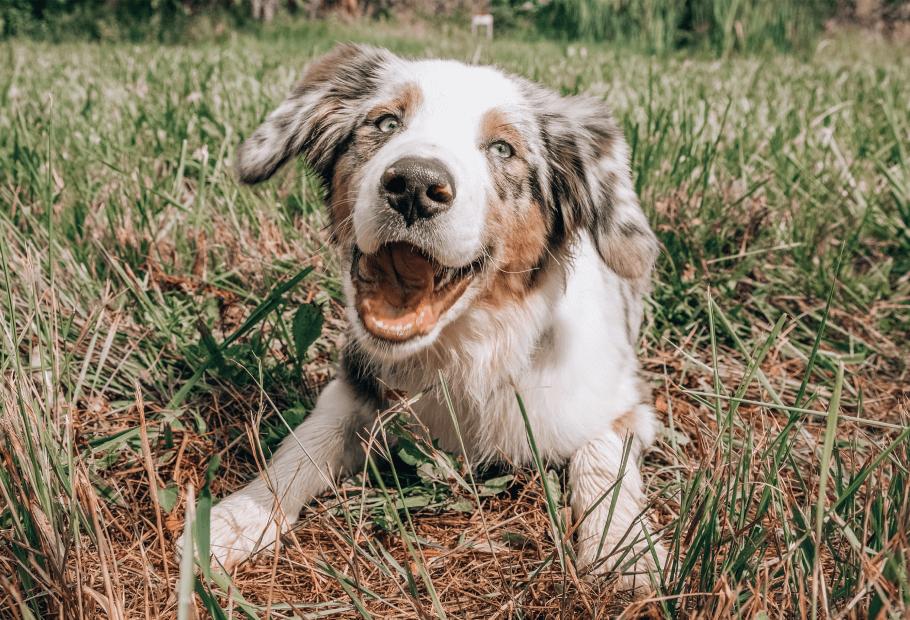 Preventative/Wellness Care for Dogs