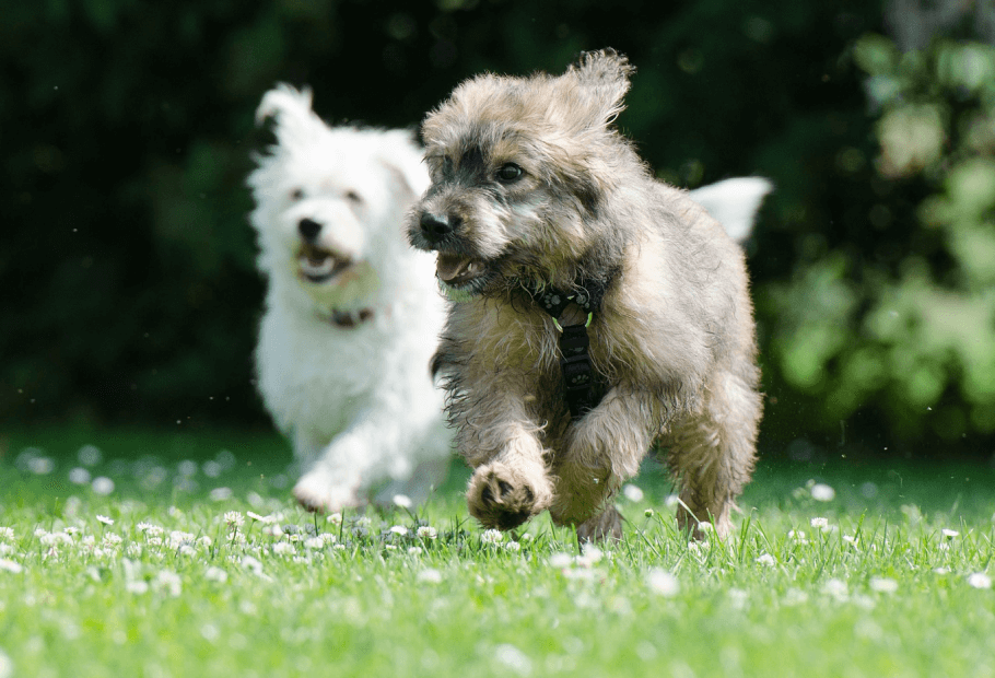 Wellness Care for Puppies